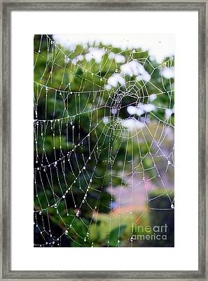 Dewdrops Dimension Framed Print by Carol Groenen