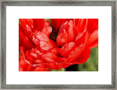 Framed Print featuring the photograph Dewdrops by Fotosas Photography