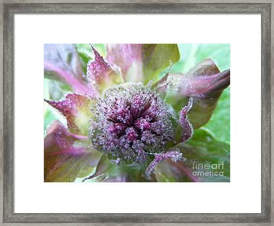 Dewey Red Bee Balm Framed Print
