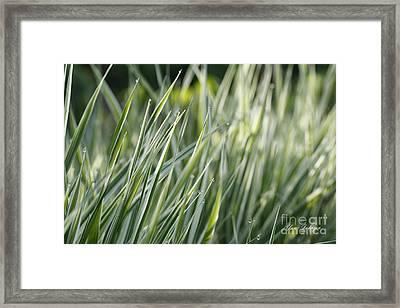 Dews Framed Print by Yumi Johnson