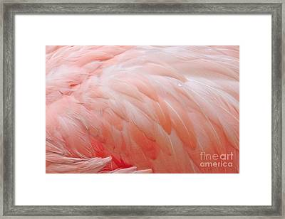 Dewy Featherbed Framed Print by Cindy Lee Longhini