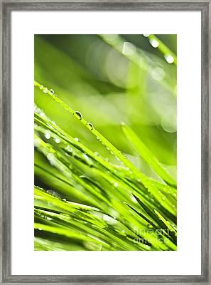 Dewy Green Grass  Framed Print by Elena Elisseeva