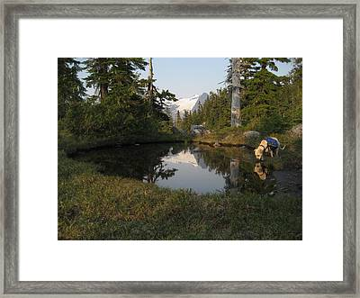 Dharma At The Pond Framed Print by Shawn Hegan