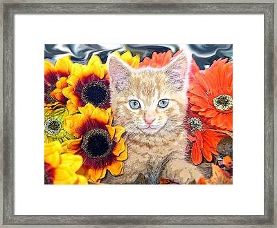 Di Milo - Sun Flower Kitten With Blue Eyes - Kitty Cat In Fall Autumn Colors With Gerbera Flowers Framed Print by Chantal PhotoPix