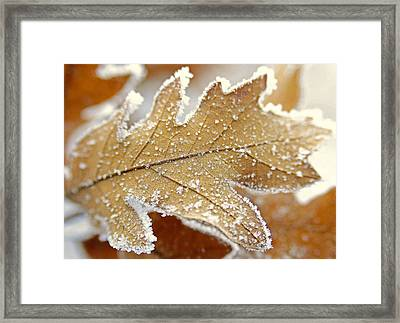 Diamonds And Rust Framed Print by The Forests Edge Photography - Diane Sandoval