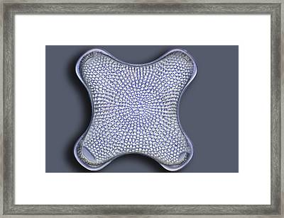 Diatom, Light Micrograph Framed Print by Frank Fox