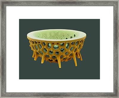Diatom, Sem Framed Print by David Mccarthy