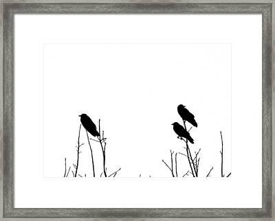 Did You Hear That Framed Print by Tom McCarthy