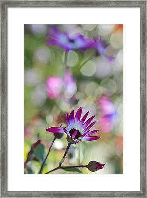 Different Framed Print
