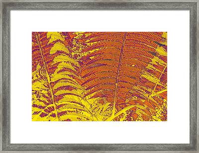 Digital Ferns Framed Print by Colleen Cannon