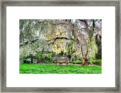 Digital Liquid -  Cherry Blossoms At The Washington National Cathedral Framed Print by Metro DC Photography