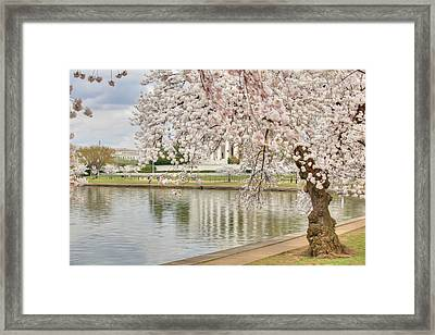 Digital Liquid - Cherry Blossoms Washington Dc 6 Framed Print