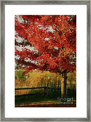 Digital Painting Maple Tree In Full Color Framed Print by Sandra Cunningham