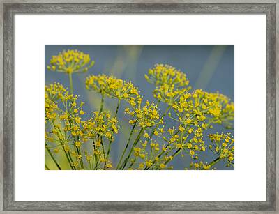 Dill Framed Print by Lisa Tate