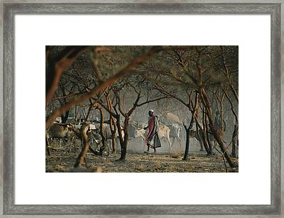 Dinka Tribesmen And Their Cattle Escape Framed Print by Randy Olson