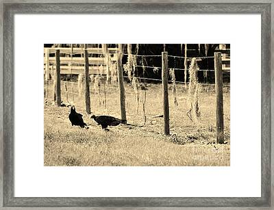 Dinner In Okeechobee Framed Print