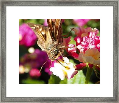 Framed Print featuring the photograph Dinner Time by Chad and Stacey Hall