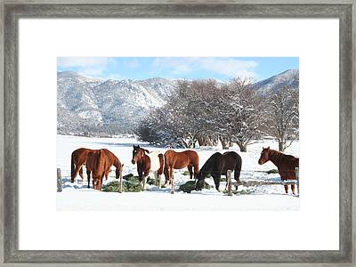 Dinner Time In The Snow Framed Print