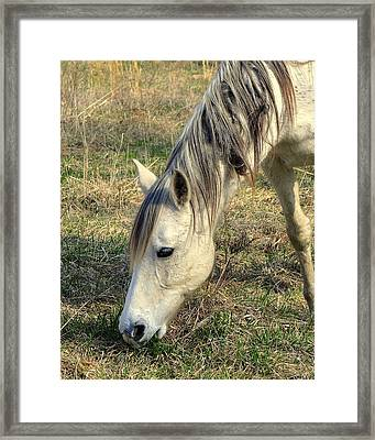 Framed Print featuring the photograph Dinner Time by Marty Koch