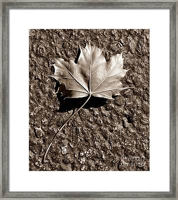 Dipped In Bronze Framed Print by Luke Moore