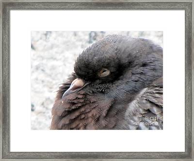 Disapproving Look Framed Print by Yury Bashkin