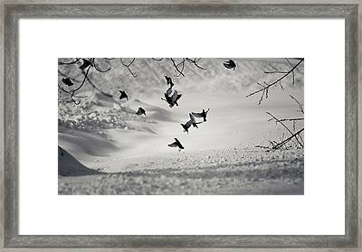 Discord Framed Print by Photography by SPL