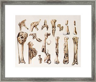 Diseased Bones Framed Print by Mehau Kulyk