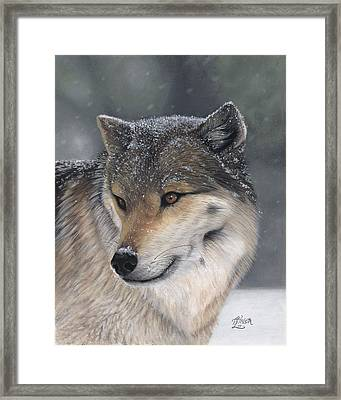 Distraction Framed Print