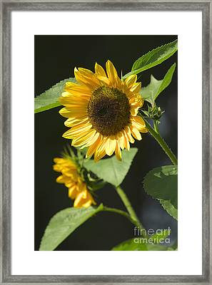 Diva Framed Print by Sharon Talson