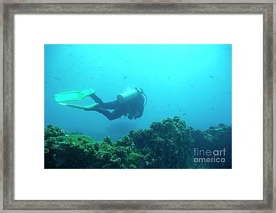 Diver By Rocks On Ocean Floor Framed Print by Sami Sarkis