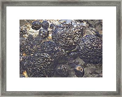 Framed Print featuring the photograph Diversity 2 by Sami Tiainen