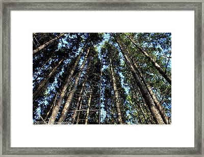 Framed Print featuring the photograph Dizzy In The Pines by Rachel Cohen