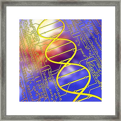Dna Circuit Board Framed Print by Pasieka