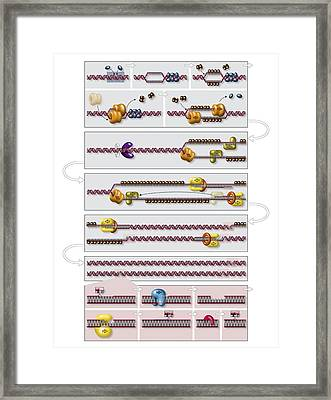 Dna Replication Process Diagram | Dna Replication Process Diagram Photograph By Art For Science