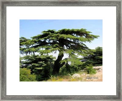 Do-00511 Cedar Forest Framed Print