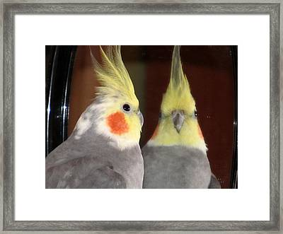 Do I Know You Framed Print by Kimberly Mackowski
