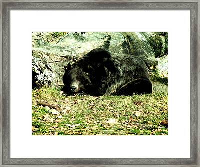 Do Not Disturb Framed Print by Margaret Buchanan