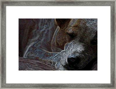 Do Not Disturb Framed Print by One Rude Dawg Orcutt