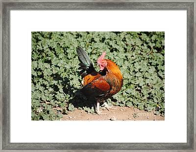 Do Not Look Back  Framed Print by Rebbeca Alt
