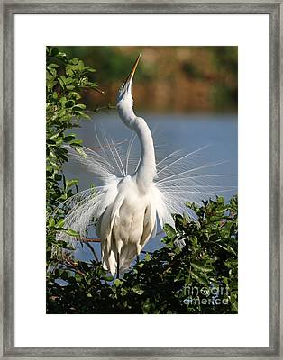 Do You See Me Now Framed Print by Sabrina L Ryan