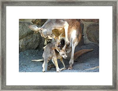 Do You Wanna Play Framed Print by Kathy Gibbons