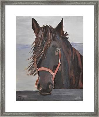 Dobbin The Horse Framed Print by Barbara Bradbury