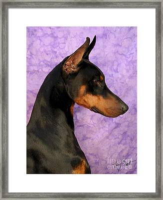 Doberman In Profile Framed Print by Maxine Bochnia