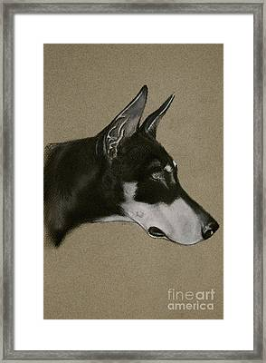 Doberman Framed Print by Susan Herber