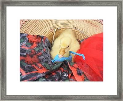 Framed Print featuring the photograph Dodo The Goose by Bogdan Floridana Oana