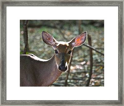 Doe Profile 9734 Framed Print by Michael Peychich