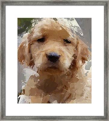 Dog 1 Framed Print by Yury Malkov