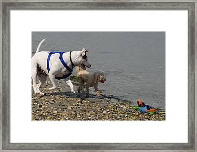 Dog 112 Framed Print by Joyce StJames
