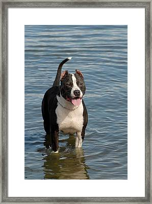 Dog 124 Framed Print by Joyce StJames