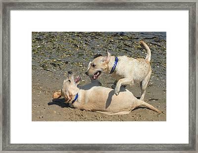Dog 76 Framed Print by Joyce StJames